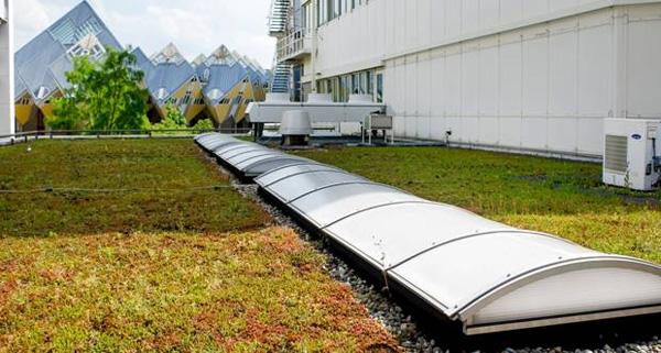 есха зелени покриви